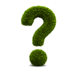 green-bush-question-mark